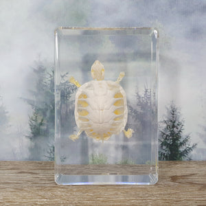 Turtle Skeleton Specimen in 135mm Resin Block