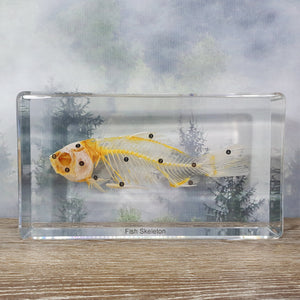Fish Skeleton in Large Resin Block