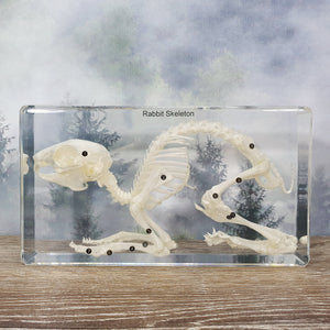 Rabbit Skeleton in 190mm Resin Block