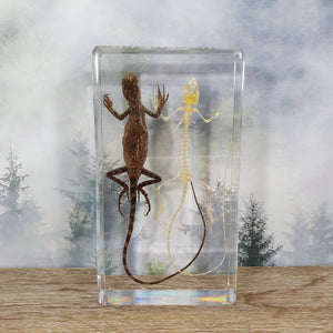 Lizard & Lizard Skeleton in Large Resin Block
