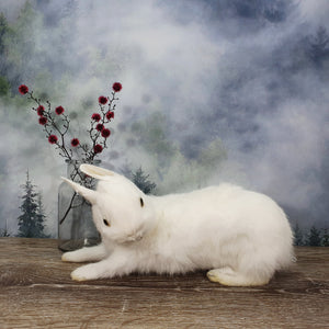 Taxidermy White Bunny - Laying