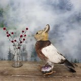 Rogue Taxidermy All Brown Bunny Bird - Wings Down