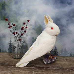 Rogue Taxidermy White with Red Eyes Bunny Bird - Wings Down
