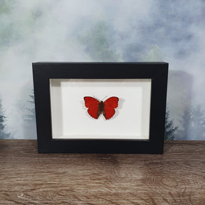 Cymothoe Crocea Hobart's Red Glider Butterfly In Small Frame