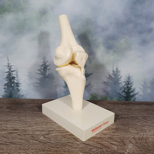 Vintage Voltaren Doctor's Knee Joint Model
