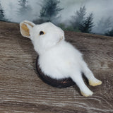 Taxidermy Pure White Bunny Half Wall Plaque