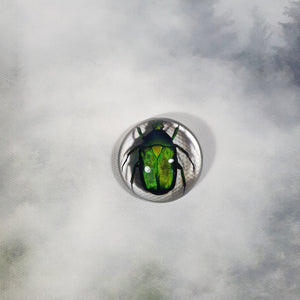Green Rose Chafer Beetle in 38mm Resin Dome