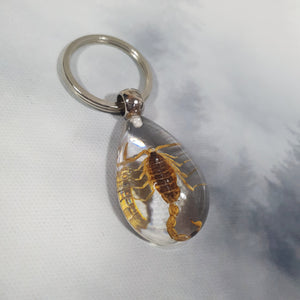 Scorpion in Resin Keyring