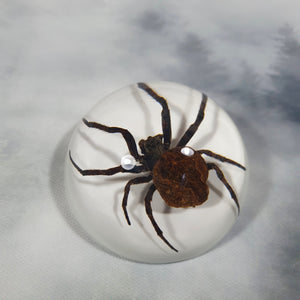 Ghost Spider in 67mm White Resin Dome