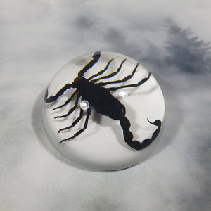 Black Scorpion in 67mm White Resin Dome