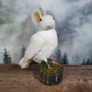 Pure White Rogue Taxidermy Bunny Bird