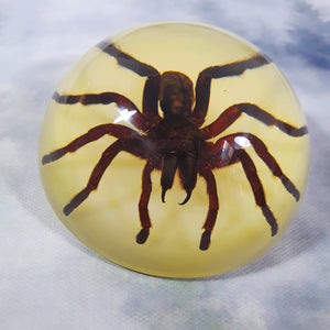 Tarantula Spider in 86mm Glow Resin Dome