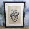 Heart Anatomical Diagram Framed Canvas Print