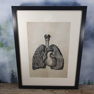 Lungs Anatomical Diagram Framed Canvas Print