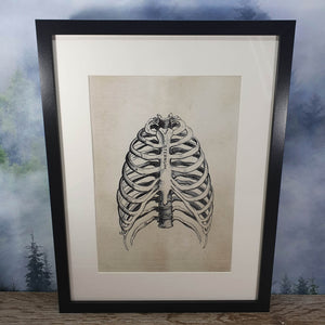 Ribs Anatomical Diagram Framed Canvas Print