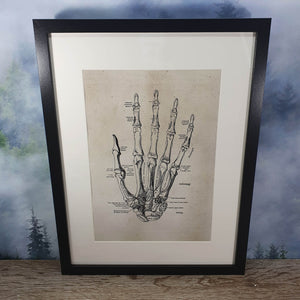 Skeletal Hand Anatomical Diagram Framed Canvas Print