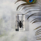 Asian Long-horned Beetle in Resin Block