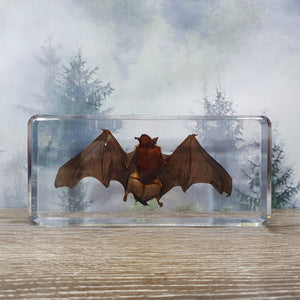 Bat in Large Resin Block