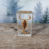 Brown Scorpion in Resin Block