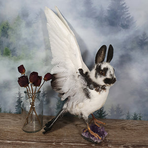 Rogue Taxidermy Black and White Bunny Bird - Wings Up