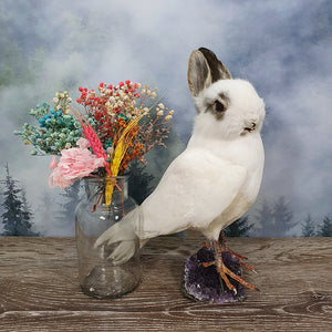 Rogue Taxidermy Mostly White Bunny Bird - Wings Down