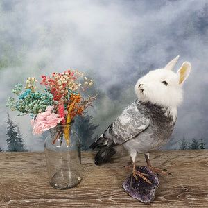 Rogue Taxidermy Grey + White Head Bunny Bird - Wings Down