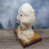 Blue Mountains Bush Booger Taxidermy Mount - Juvenile