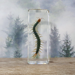 Centipede in Large Resin Block