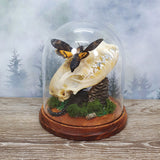 Red Fox Skull, Death Head Moth and Scorpion in Large Dome
