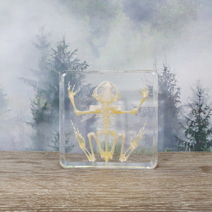 Frog Skeleton Specimen in 75mm Resin Block