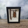 Hanging Fruit Bat in Large Frame