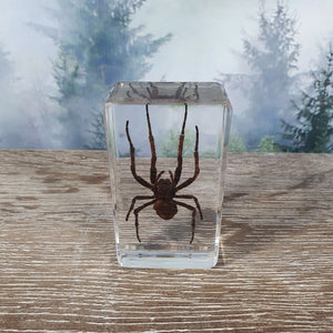Large Spider in Resin Block