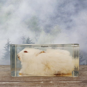 Rabbit in Large Resin Block
