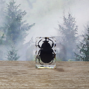 Rhinoceros Beetle in Small Resin Block
