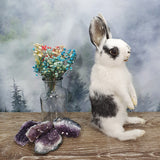 Taxidermy Black and White Bunny