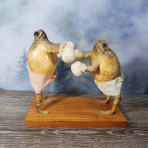Taxidermy Boxing Toads