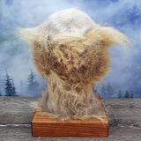 Blue Mountains Bush Booger Taxidermy Mount - Moe