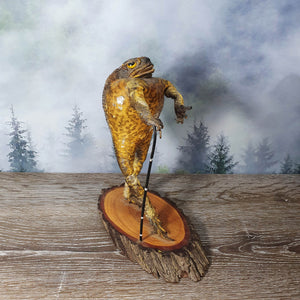 Taxidermy Smart Toad #2