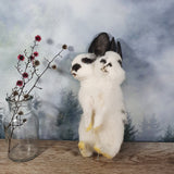 Rogue Taxidermy Black and White Two Headed Bunny
