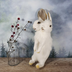 Rogue Taxidermy Pure White Two Headed Bunny