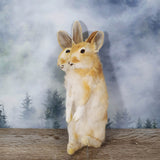 Rogue Taxidermy Tan Two Headed Bunny