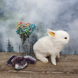 Taxidermy White Bunny - Sitting