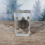 Turtle in Resin Block