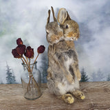 Rogue Taxidermy Brown Two Headed Bunny