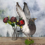 Rogue Taxidermy Two-Headed Grey Pigeon -  Wings Up