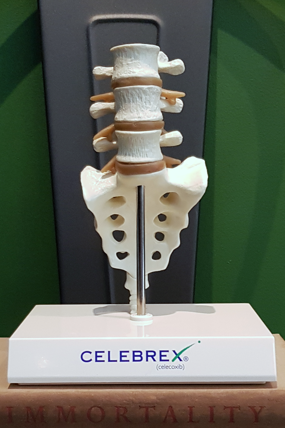 Vintage Celebrex Doctor's Lumbar Spine Medical Model