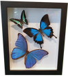 Trio of Butterflies in Large Frame