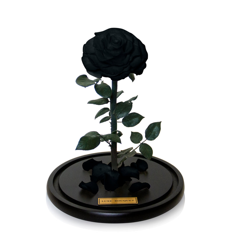 Black Everlasting Rose Dome