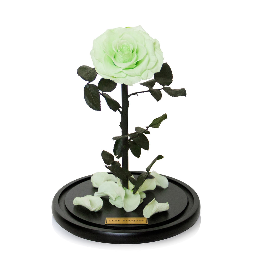The Everlasting Rose - Mint - Luxe Bouquet roses that last a year