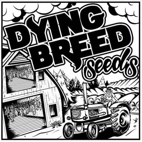 Blue Dog Star By Dying Breed Seeds
